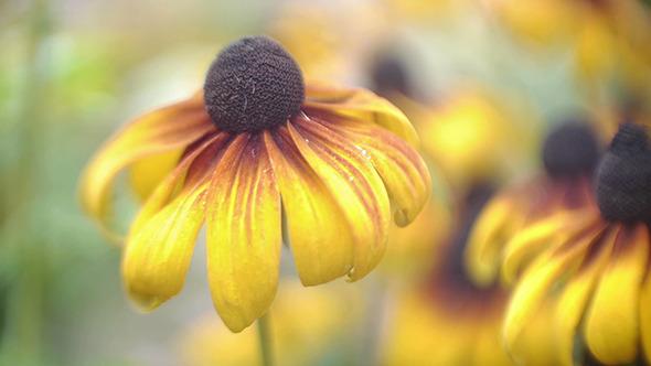 August Flower 1