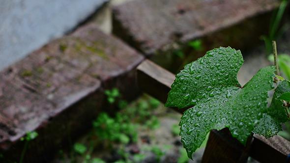 Raindrops Falling On The Leaves 2