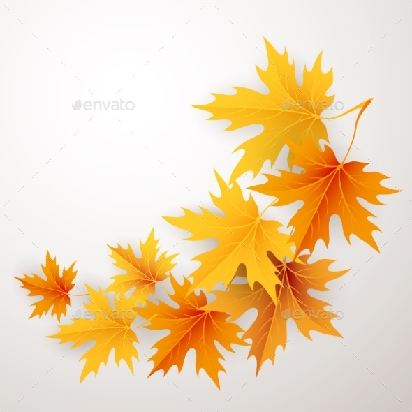 Autumn Maples Falling Leaves Background.  - Abstract Conceptual