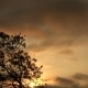 The Tree Against The Sky - VideoHive Item for Sale