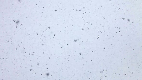 Snow Falling On The Lens 2