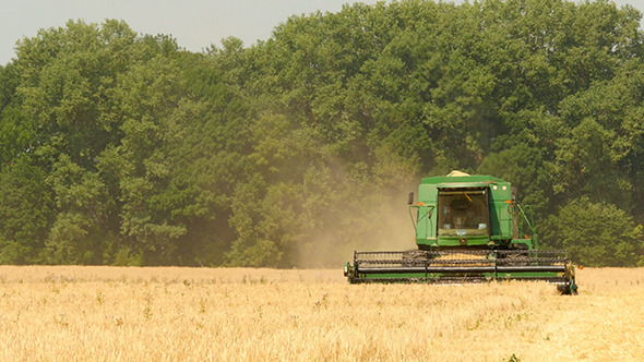 Modern Combine Harvesting Grain In The Field