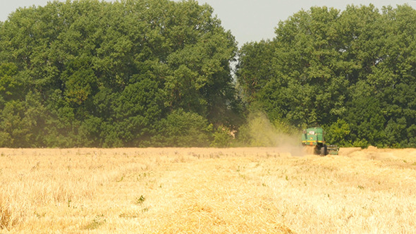 Modern Combine Harvesting Grain In The Field