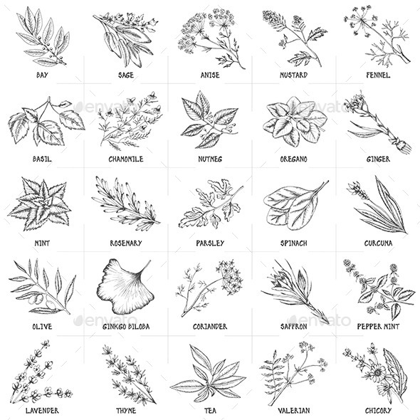 Herbal Graphic Set - Food Objects