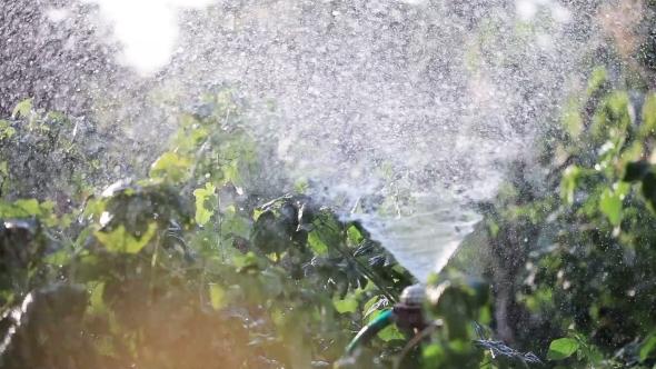 Watering Garden Natures