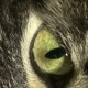 The Cat's Eye - VideoHive Item for Sale