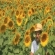 A Farmer In The Field Of Sunflower - VideoHive Item for Sale