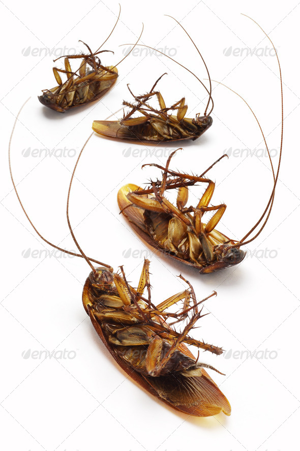 Dead cockroaches - Stock Photo - Images