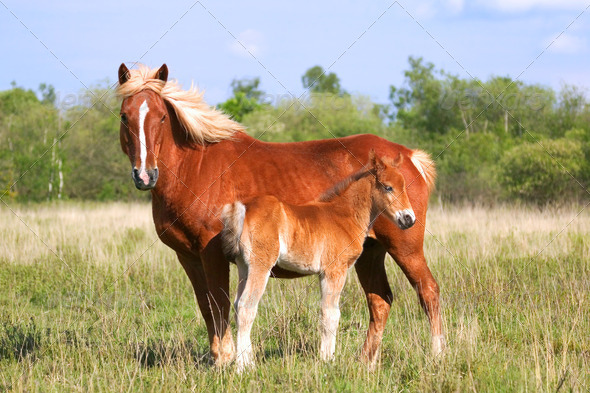 Mare and Colt profile - Stock Photo - Images