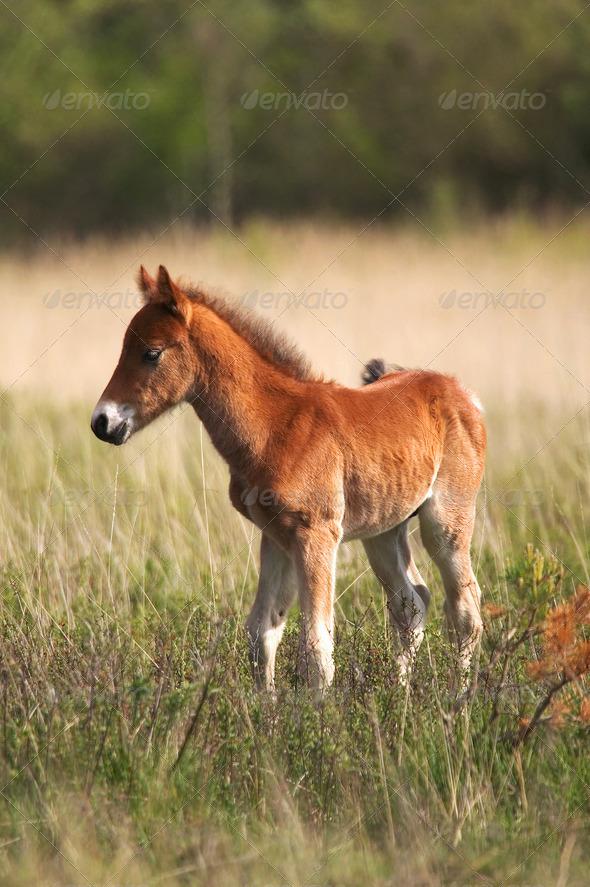 Wild Colt - Stock Photo - Images