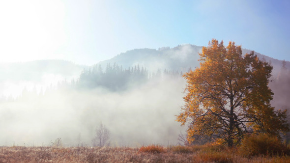 Autumn Morning Mist in the Mountains