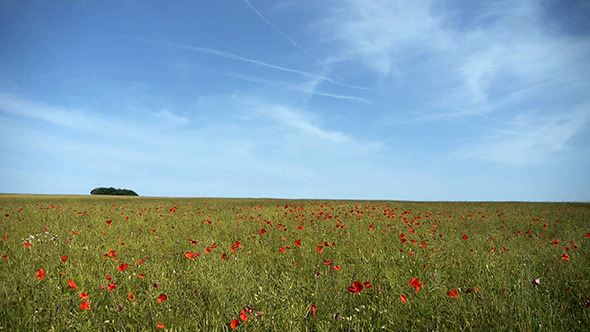 Landscape With Red Poppy Field
