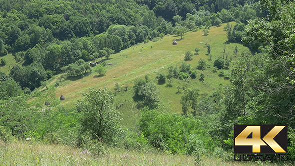 Forests and Grasslands in Summer