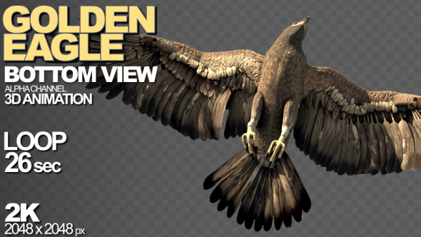 Golden Eagle Bottom View