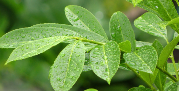 Raindrops on Green Plant Leaves