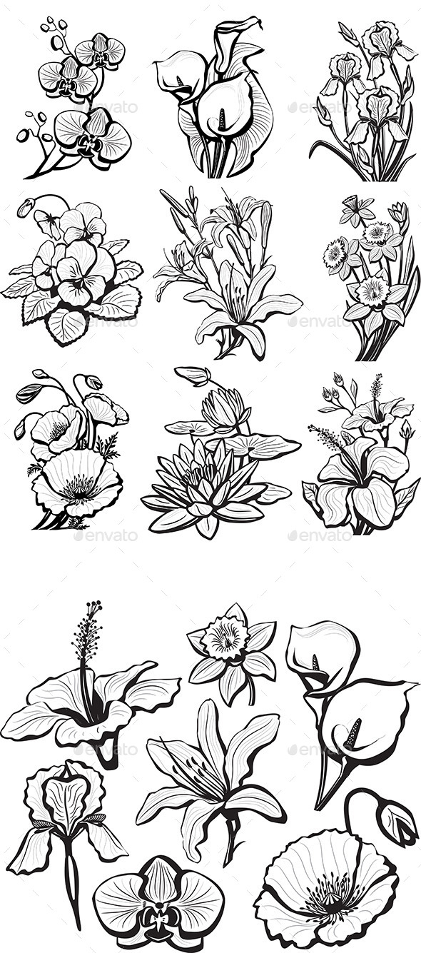 Set of Sketches of Flower - Flowers & Plants Nature