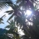 Palm Trees In Jungle And Shining Sun Through Palms - VideoHive Item for Sale