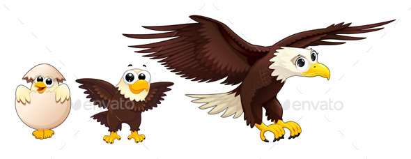 Development of the Eagle in Different Ages - Animals Characters