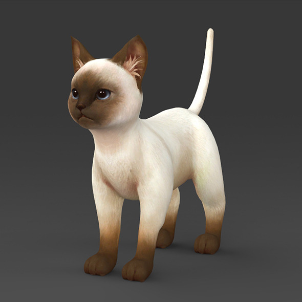 White Brown Kitten - 3DOcean Item for Sale