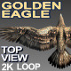 Golden Eagle Top View - VideoHive Item for Sale