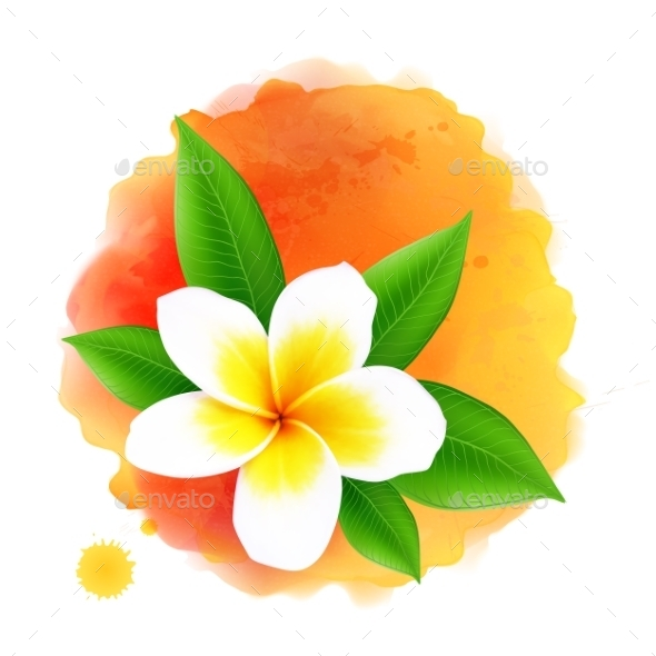Vector Frangipani Flower On Orange Watercolor - Seasons Nature