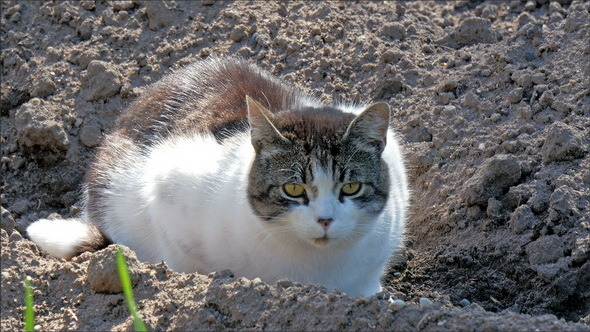 Big Fat Cat on the Soil