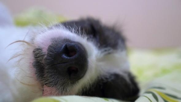 Dog Nose Sniffing