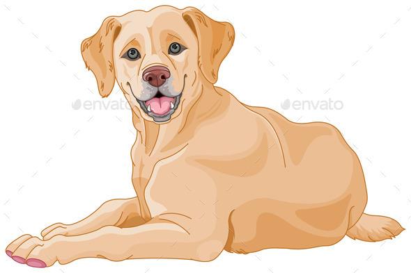 Labrador  - Animals Characters