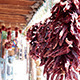 Dried Chile Peppers Hanging in a Market - VideoHive Item for Sale
