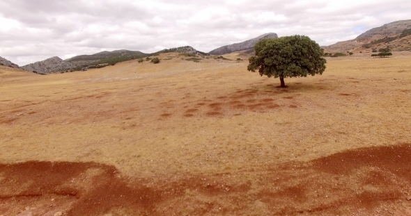 Aerial Drone Flight Over Dry Field Of Grass