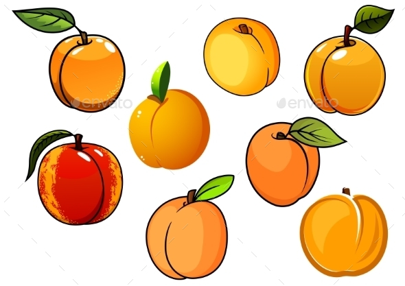 Isolated Orange Sweet Apricots Fruits - Food Objects