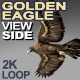 Golden Eagle Side View - VideoHive Item for Sale