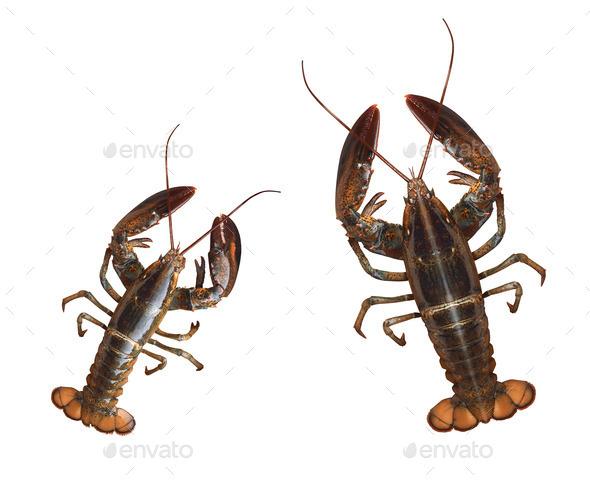 Crayfishes isolated on white background - Stock Photo - Images