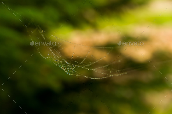 The web with water drops - Stock Photo - Images