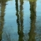 Reflection Of Trees In The Water - VideoHive Item for Sale