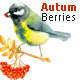 Floral Collection Autumn Berries - GraphicRiver Item for Sale