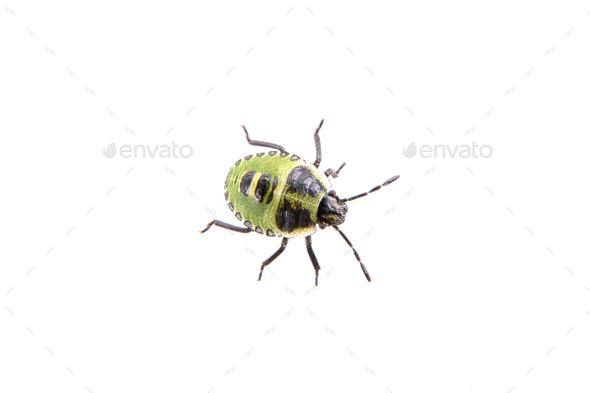 Black green beetle on the white background - Stock Photo - Images