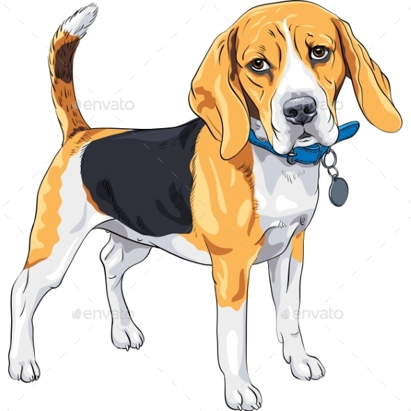 Vector Sketch Serious Dog Beagle Breed  - Animals Characters