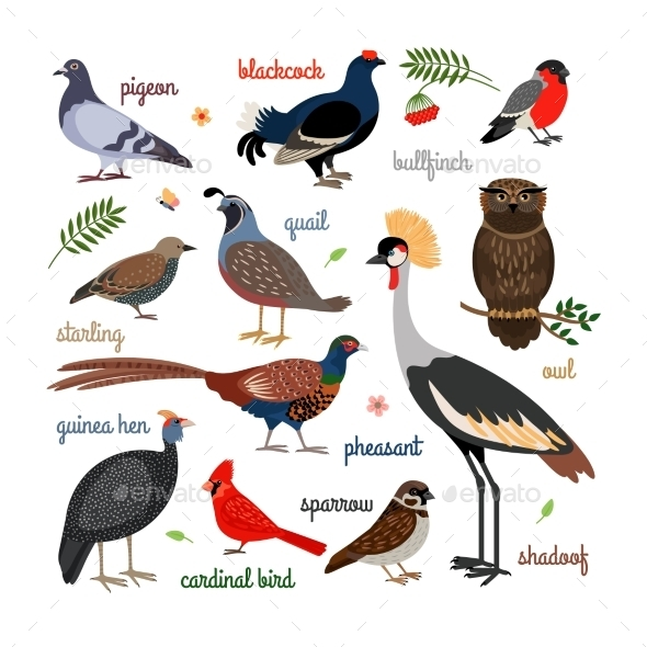 Vector Bird Icons - Animals Characters
