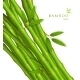 Background With Green Bamboo - GraphicRiver Item for Sale