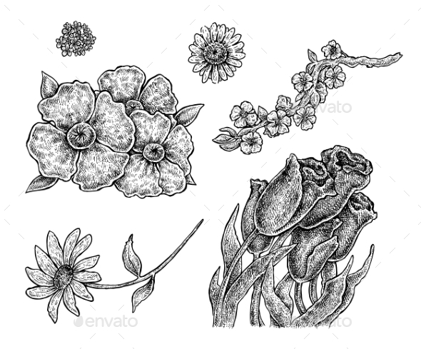 Set of Hand Drawn Ink Flowers - Flowers & Plants Nature