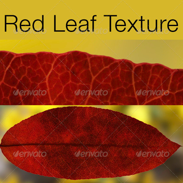 Red Leaf Texture - 3DOcean Item for Sale