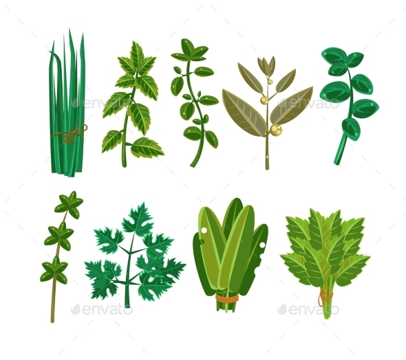 Set Of 9 Vector Herbs - Food Objects