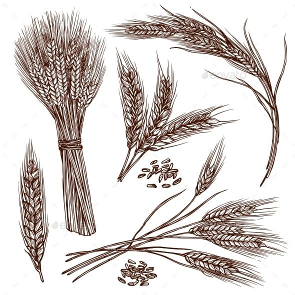 Wheat Sketch Set