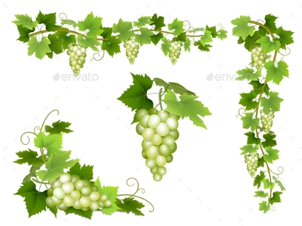 Set of Bunches of White Grapes - Food Objects