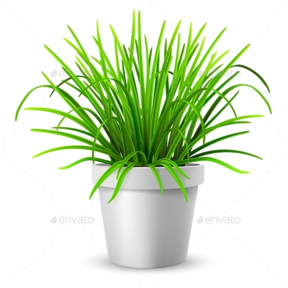 Green Grass in White Flowerpot