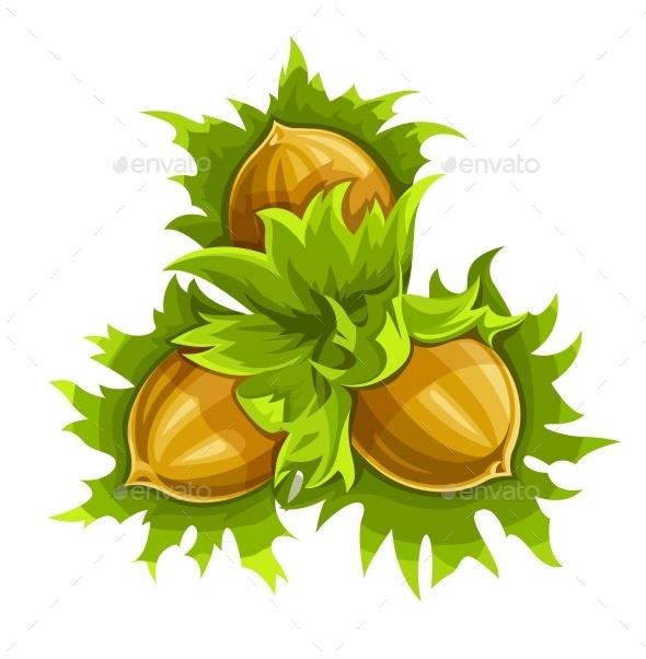 Cluster of Ripe Hazelnuts - Organic Objects Objects