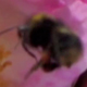 Slow Motion Bee 1 - VideoHive Item for Sale