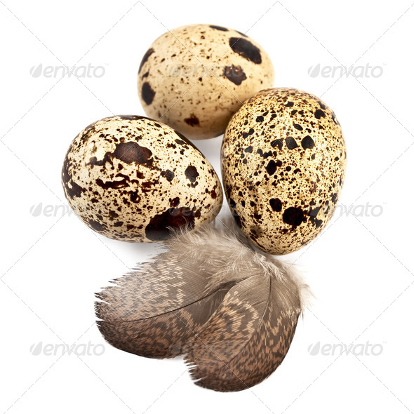 Eggs quail - Stock Photo - Images