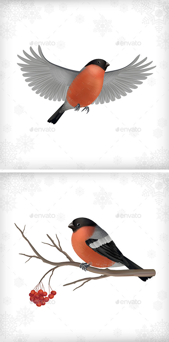 Winter Bird Bullfinch Set - Animals Characters
